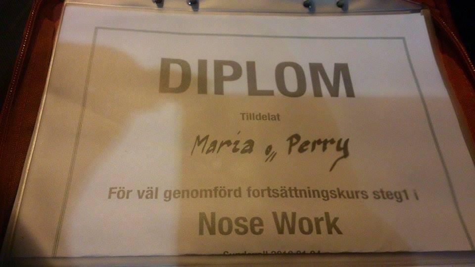 nosework